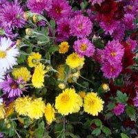 срезанные осенние цветы на рынке... :: Галина Флора