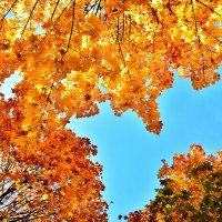 Небо, листья, октябрь :: Сергей Землянский