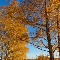 Осенние зарисовки из Нижегородской области :: Роман Царев