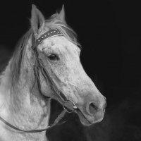 Лошадь :: Александр Абакумов
