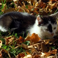 Осень... :: Владимир однакО...