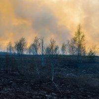 Лесной пожар. :: Владимир Лазарев