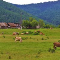 На окраине села :: Сергей Чиняев