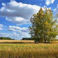 Во  поле  берёзка  стояла... :: Геннадий С.
