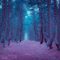 Пьяный лес :: Victor Yastrebov