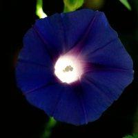 загадки цветов :: Бармалей ин юэй