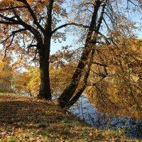 Солнечный октябрь :: ZNatasha -