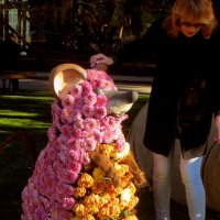 Бал хризантем.фото-4. :: Nata