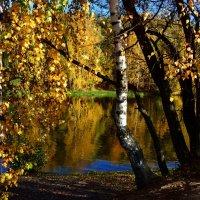 Какая дивная пора! Деревья в золото одеты... :: Ольга Русанова (olg-rusanowa2010)