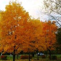 золотое дерево :: Владимир