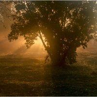 Утро в деревне :: Александр Максимов