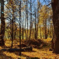 В заколдованном парке :: Olcen Len