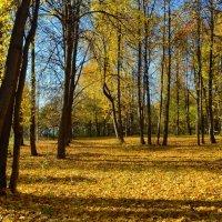 В осеннем парке :: Olcen Len