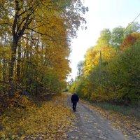Дорога в осень. :: Чария Зоя