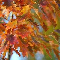 Осенние листья :: kvstu