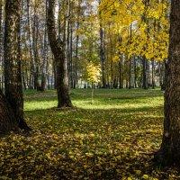 Осеннее фото :: Владимир Буравкин