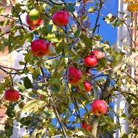 Соседские яблоки самые вкусные! :: Татьяна Помогалова