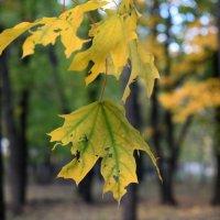 Тронула листья осень кистью волшебною... :: Татьяна Ларионова