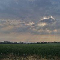 Поле , утро . :: irina Schwarzer