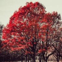 Одинокий дуб... :: Макс Беккер