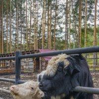 В зоопарке :: Ольга