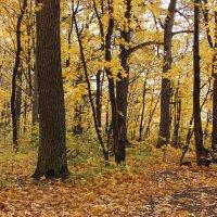 Золотая красота осени :: Ната Волга