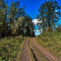 лесная дорога. :: petyxov петухов