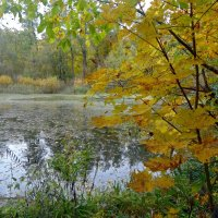 Лесное озеро. :: Чария Зоя