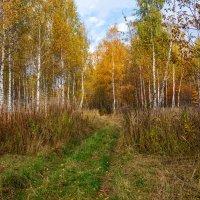 Тёплый октябрь 2018 :: Андрей Дворников