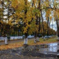 Вот и осень пришла. :: Виктор Иванович Чернюк