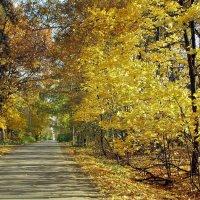 Золотые дороги :: Алла Захарова