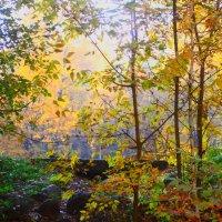 Осень ты прекрасна ! :: олег свирский