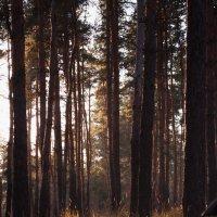 лучи в лесу :: Алина Гриб