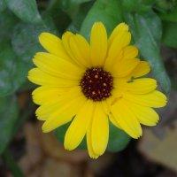 цветок :: константин Чесноков