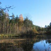 Солнечный денек в октябре :: Елена Павлова (Смолова)