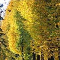 Золотая осень :: Alika Demi