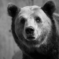 Авторитет зоопарка :: Alm Lana