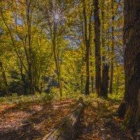 Солнечный  лес 2 :: DALAR ***