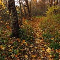Почти совсем отзолотилась осень :: Андрей Лукьянов