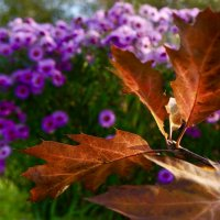 Эта осень :: Тамара