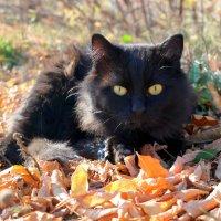 Шурша  листвою котоосень наступила..:) :: Андрей Заломленков