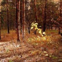 На солнечной поляночке . :: Мила Бовкун