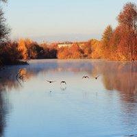 полет уток над рекой :: Владимир Акилбаев