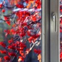Огонь рябины за окном :: Сергей Елесин
