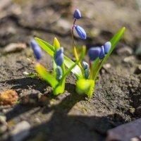 весна :: Ustas FritZZZ