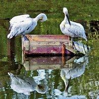 Глядим в озёра синие :: Nikolay Monahov
