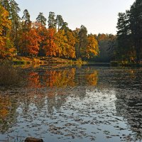 Осеннее лесное озеро :: Тамара Бедай