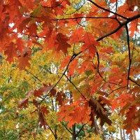 деревья :: tina kulikowa