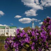 С цветами азалии :: Наталия Женишек