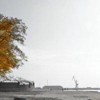 Осень идет... :: Александр Довгий